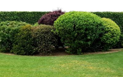 Pourquoi faire appel à un paysagiste pour votre aménagement extérieur ?
